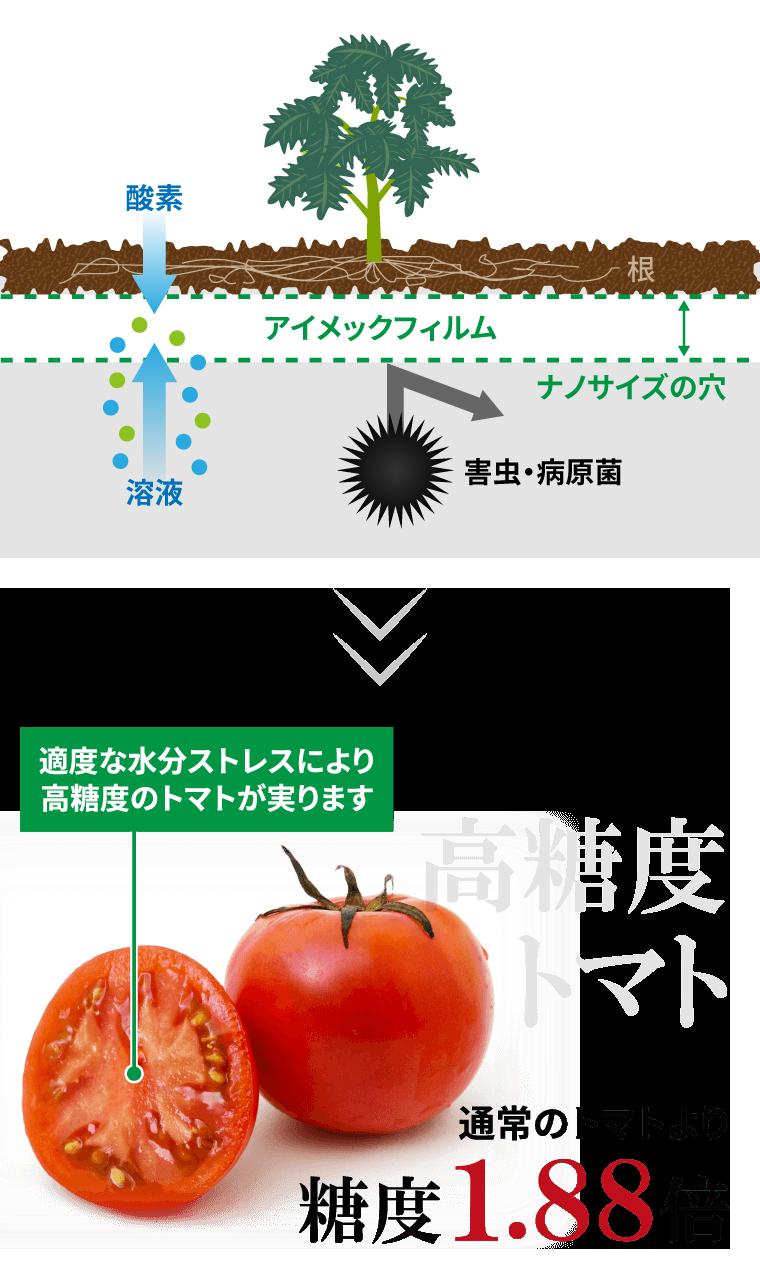 高糖度トマトは甘い